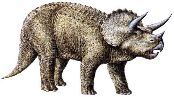 How do paleontologists use carbon hookup